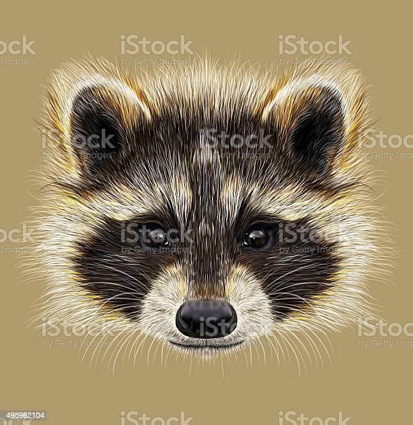 Illustrated Portrait Of Raccoon Stock Illustration - Download Image Now