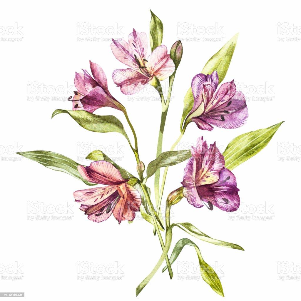 Ilustración en acuarela de una flor de flor de Alstroemeria. Tarjeta floral con flores. Ilustración botánica. - ilustración de arte vectorial