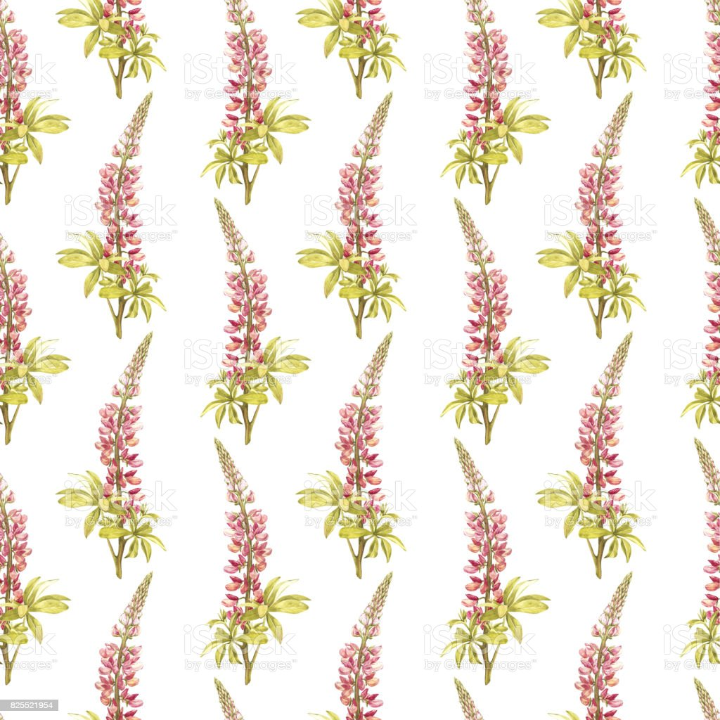 Illustration in watercolor of a Lupine flower. Floral card with flowers. Botanical illustration seamless pattern. vector art illustration