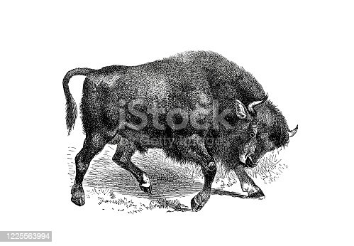 Illustrations from the popular encyclopedia