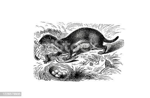 Illustrations from the popular encyclopedia