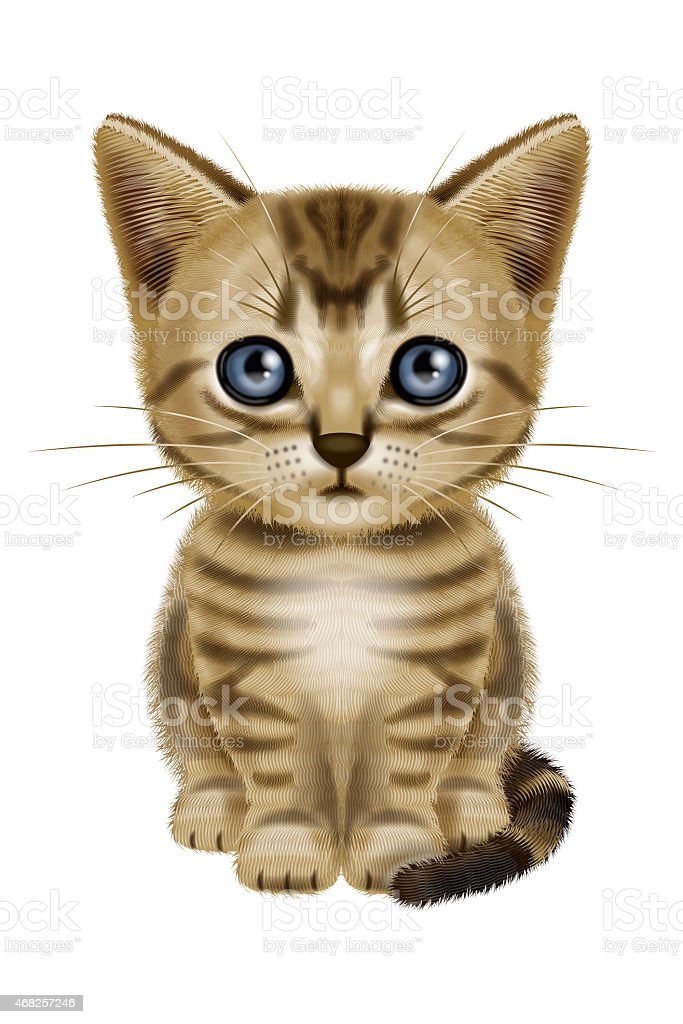 Illustration of a short hair cat. vector art illustration