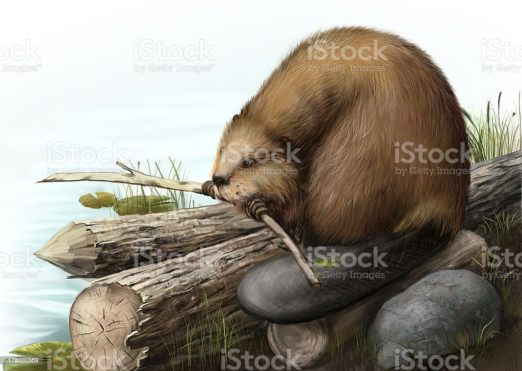 Illustration of beaver sitting on a log royalty-free stock vector art