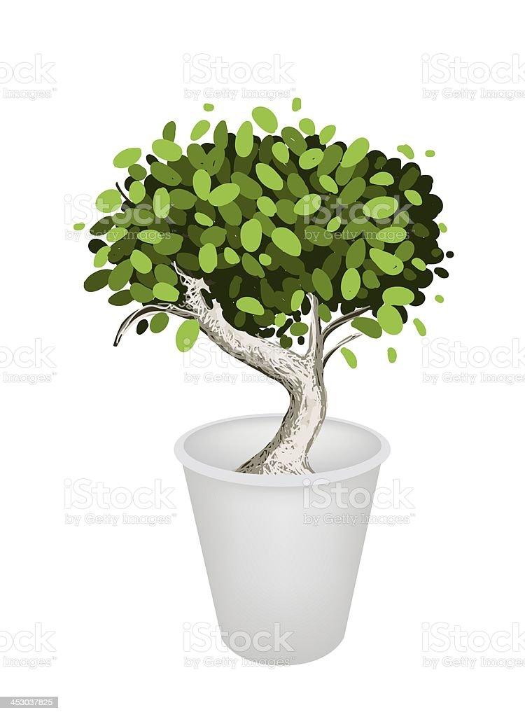 Illustration of Bonsai Tree in A Ceramic Pot vector art illustration