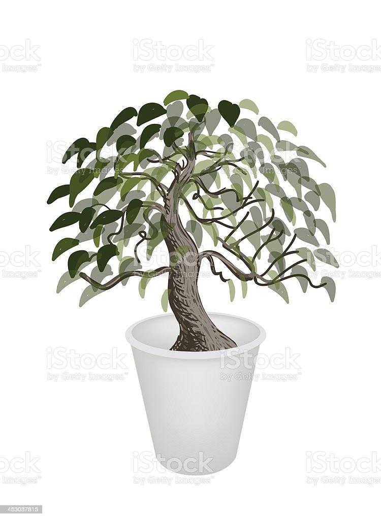 Illustration of Bonsai Tree in A Flower Pot vector art illustration