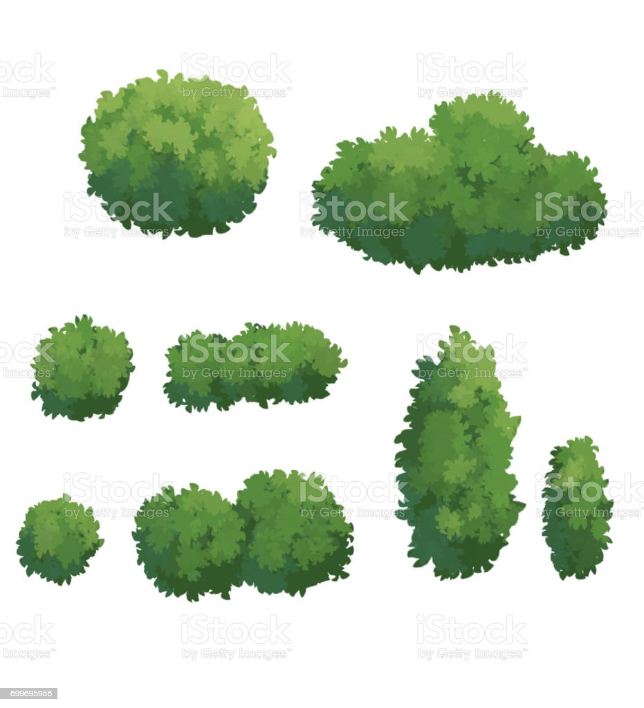 illustration of Bush vector art illustration