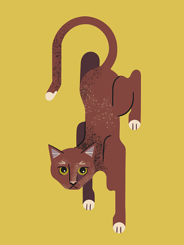 Illustration of curious cat in crouching stance