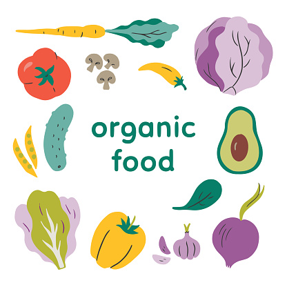 Illustration of fresh organic vegetables — hand-drawn vector elements