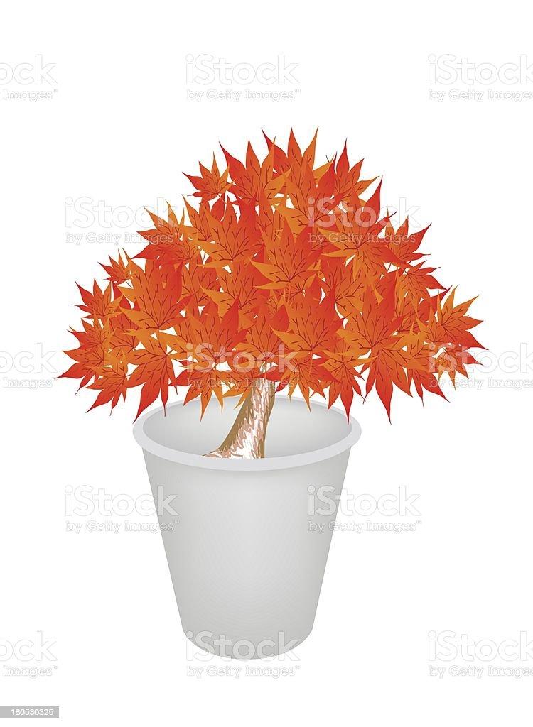 Illustration of Maple Bonsai in A Flower Pot vector art illustration