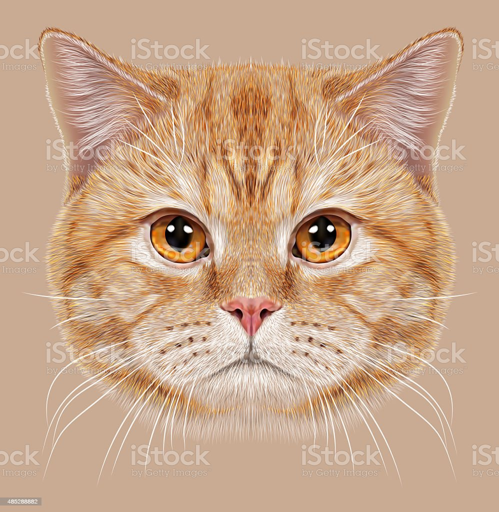 Illustration of Portrait British short hair Cat vector art illustration