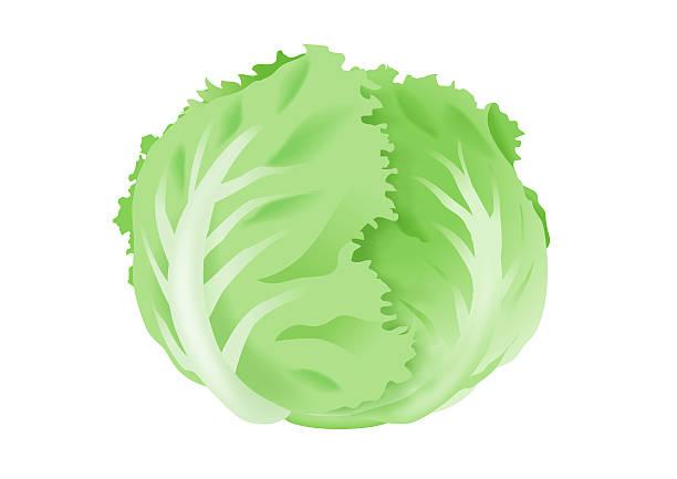 Iceberg Lettuce Illustrations, Royalty-Free Vector ...