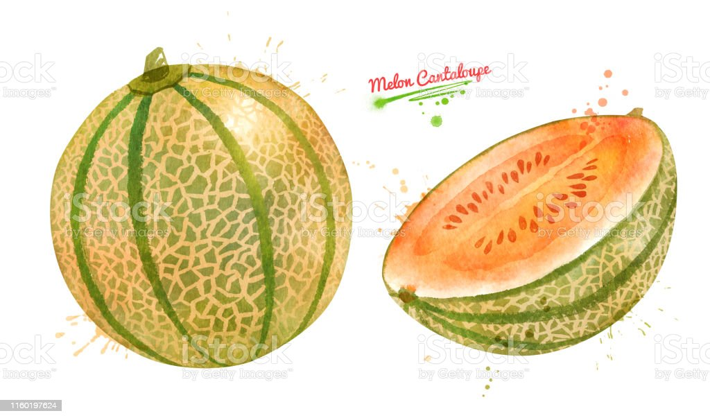 Illustration Of Whole And Sliced Melon Cantaloupe Stock Illustration Download Image Now Istock 1,720 cantaloupe clip art images on gograph. illustration of whole and sliced melon cantaloupe stock illustration download image now istock