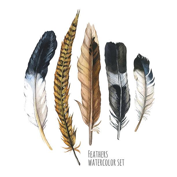 stockillustraties, clipart, cartoons en iconen met illustration with different sketch feathers. boho style. - vogel herfst