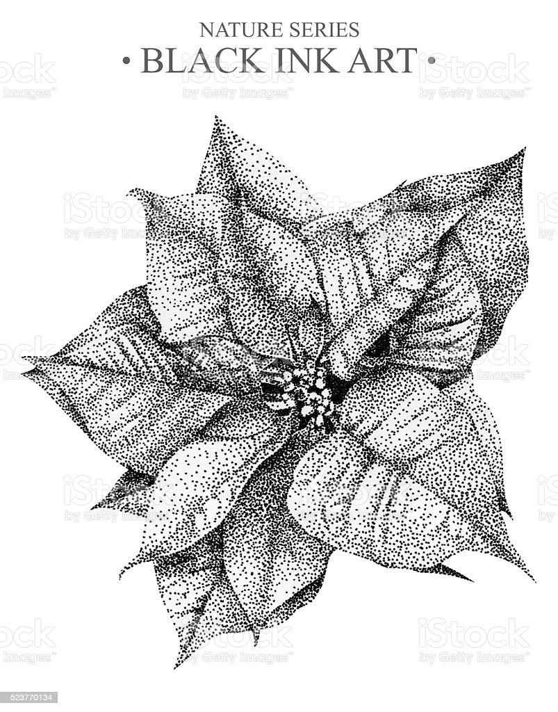 Ilustración De Flor De Nochebuena Con Flor Ilustración Dibujado A
