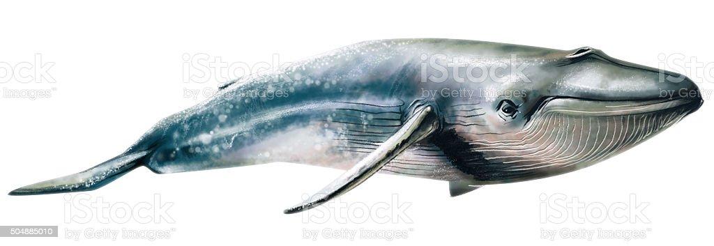 Illustration avec observation des baleines - Illustration vectorielle