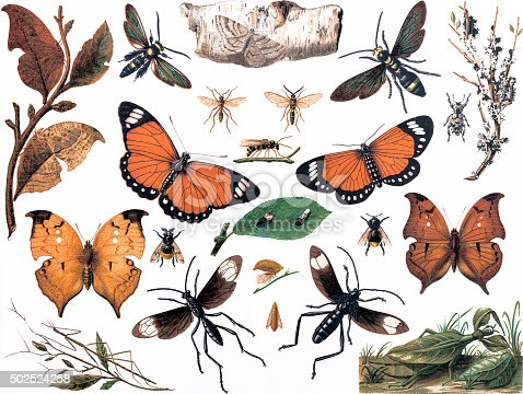 Imitative insects