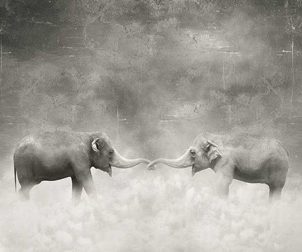 In love Couple of elephants who keeps with their trunks like a lovers in black and white and a surreal background styles stock illustrations