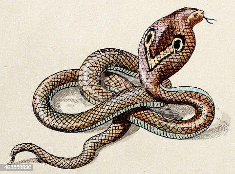 Indian cobra, reptiles animals antique illustration
