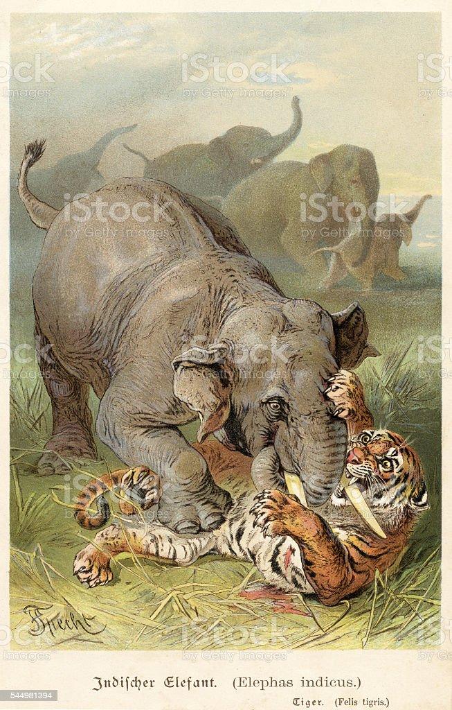 [Image: indian-elephant-fighting-tiger-1888-illu...d544981394]