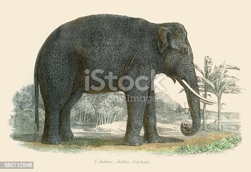 The Museum of Natural History - the Animal Kingdom (Mammalia)  Published by William Mackenzie, 1803 - London
