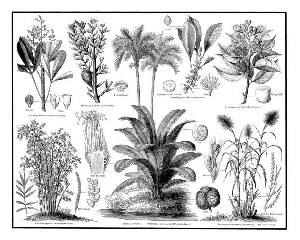 illustrazioni stock, clip art, cartoni animati e icone di tendenza di industrial plants - canna da zucchero