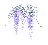 Wisteria is very graceful and attractive plant for spring season, with fragrant, violet-blue or lavender blooms in mid- to late spring. Its long racemes of flowers drape down from soft green heads of foliage. In addition to violet-blue or lavender, blooms can be pinkish or white color.