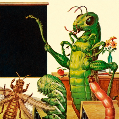 Insect Classroom