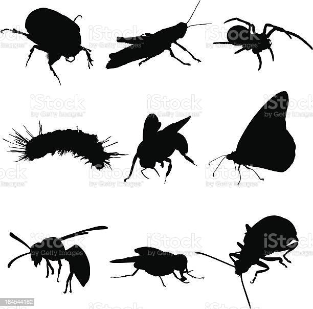 Insects bugs and spiders illustration id164544162?b=1&k=6&m=164544162&s=612x612&h=mivg5 kcnkocb44jpd1orrsywe qookn g 0klrm2zs=