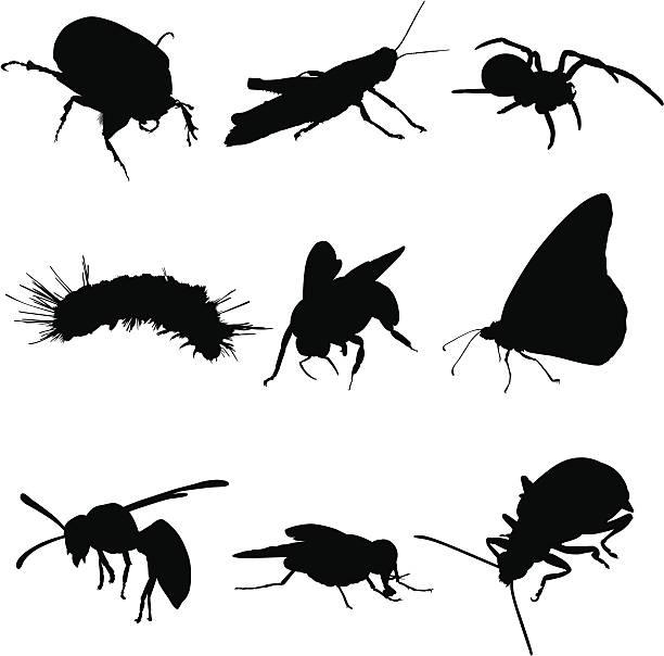 버그를 곤충, 거미 등 - 곤충 실루엣 stock illustrations