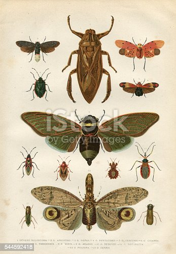 Steel engraving of different insects