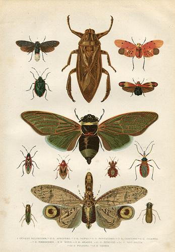 Insects cicada bug beetle 1881
