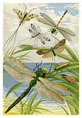 Insects - Scanned 1875 Engraving