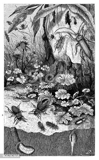 Insects in the forest - Scanned 1876 Engraving