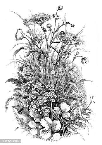 Illustration of a Insects in the meadow