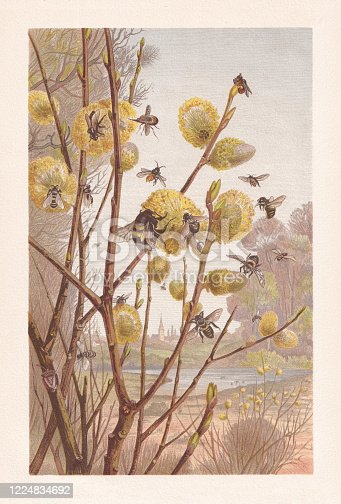 Insects in the spring. Chromolithograph, published in 1884.