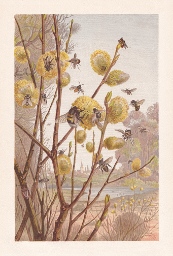 Insects in the spring, chromolithograph, published in 1884