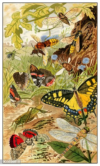 Insects in the wild - Scanned 1876 Color Engraving