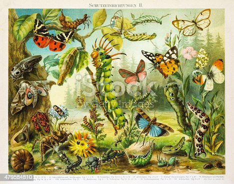Insects protection devices lithograph