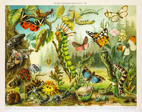 Vintage nature stock illustrations