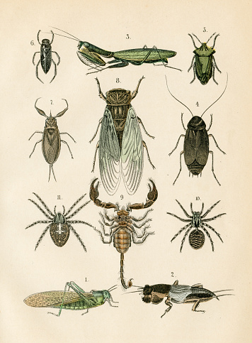 Insects: spider, mantis, cockroach, scorpion engraving 1872