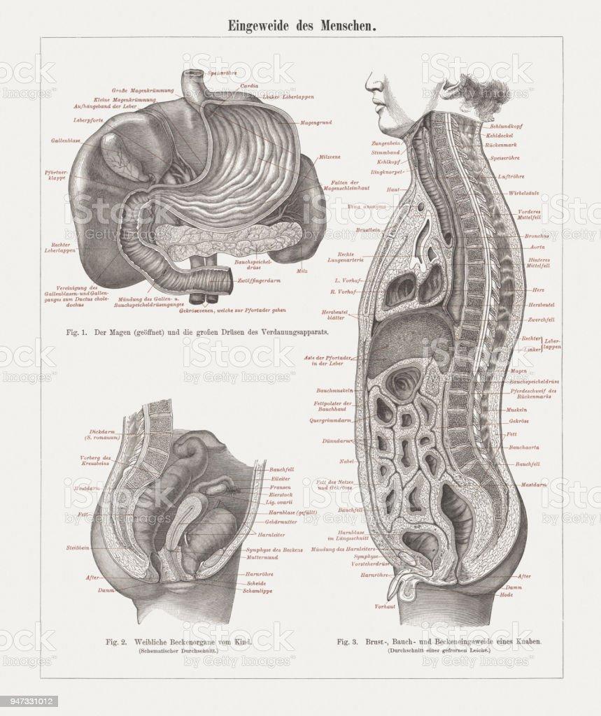 Charmant Grundlagen Der Menschlichen Anatomie Und Physiologie 9 ...