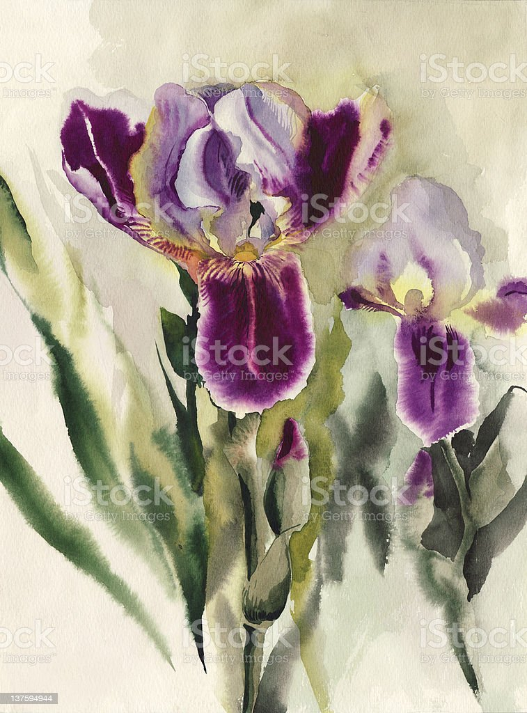 Irises royalty-free irises stock vector art & more images of art