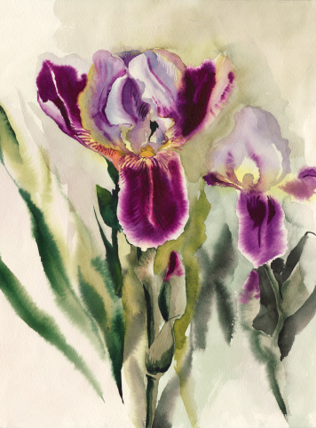 Irises Stock Illustration - Download Image Now