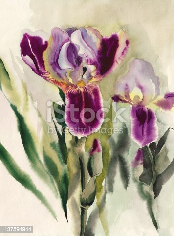 Irises Stock Vector Art & More Images of Art 137594944