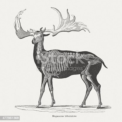 Irish elk (Megaloceros giganteus), skeleton and body. Extinct species from the Ice Age. Woodcut engraving, published in 1875.