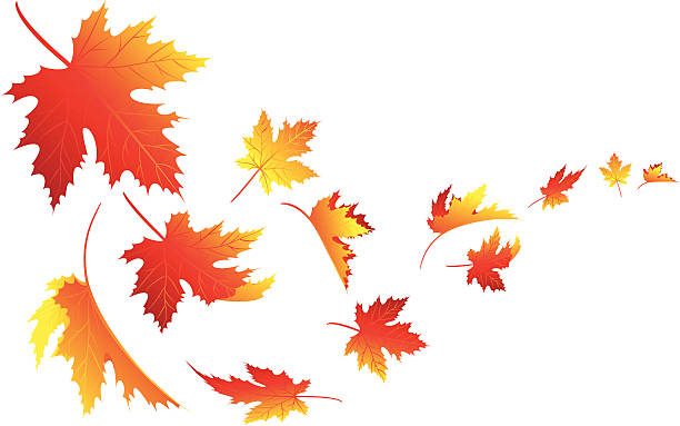 Isolate fall leaves Vector illustration autumn falling maple leaf stock illustrations