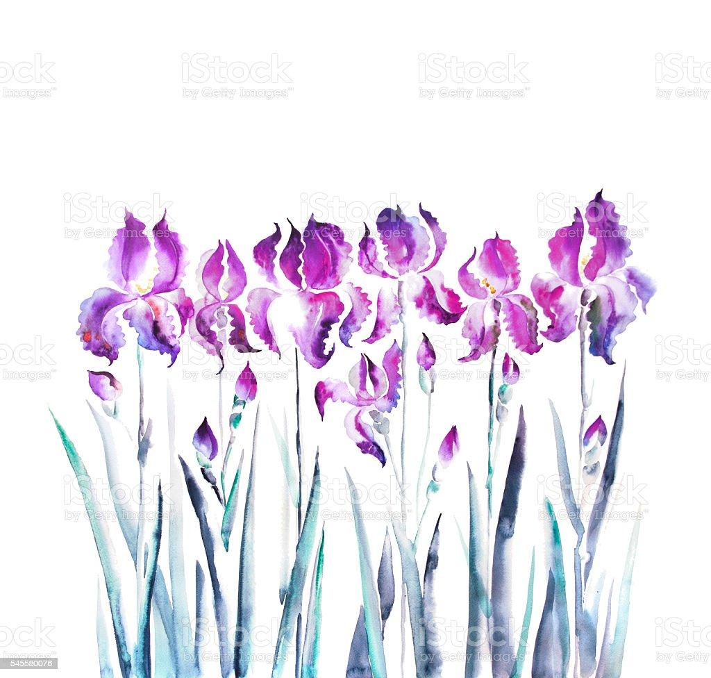Isolated iris flower garden watercolor illustration stock vector art isolated iris flower garden watercolor illustration royalty free isolated iris flower garden watercolor illustration stock izmirmasajfo