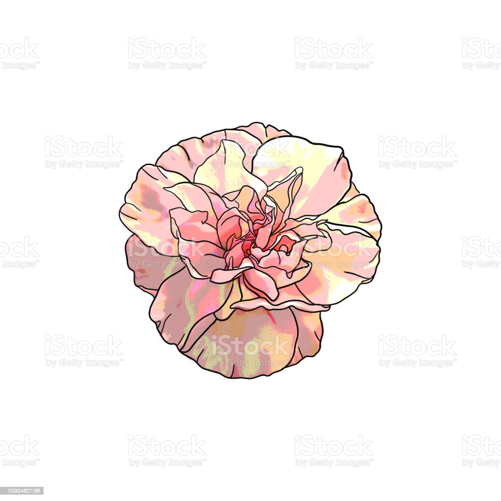 It's just a graphic of Nifty Pink Carnation Drawing