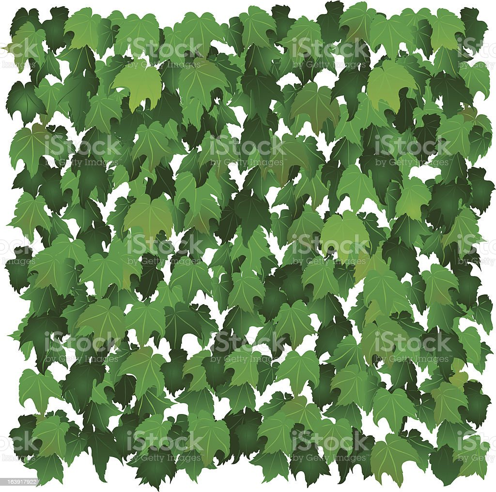 Ivy Wall vector art illustration
