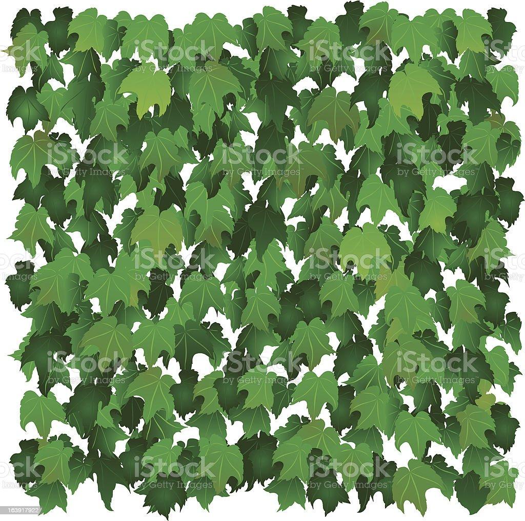 Ivy Wall vector art illustration